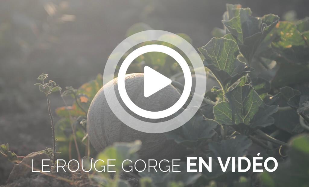 Les vidéos sur les melons Le Rouge Gorge