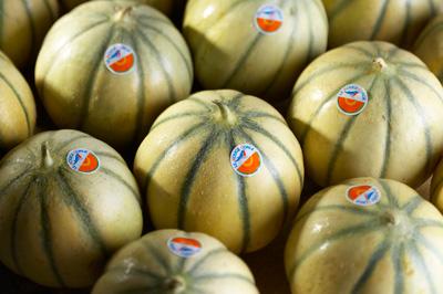 lot de melon Le Rouge Gorge